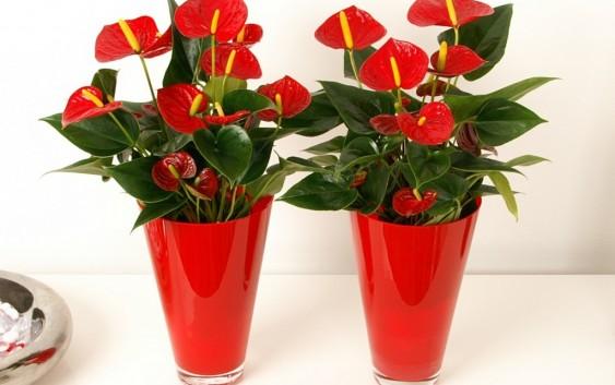ყვავილების ქოთნები – თანამედროვე დეკორი ინტერიერში