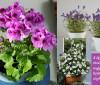 3 მცენარე, რომელიც თქვენს სახლს სურნელებით აავსებს