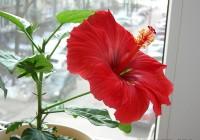 10 ოთახის მცენარე, რომლებიც თქვენს ოჯახში სიყვარულსა და იღბალს შემოიტანენ
