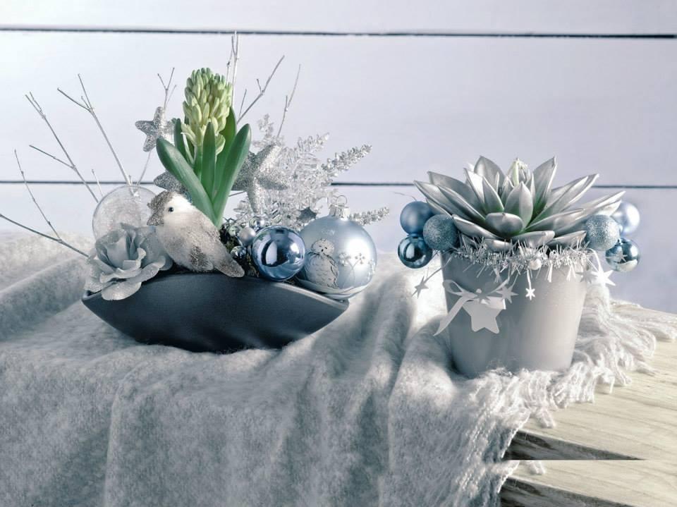 ოთახის-ყვავილები