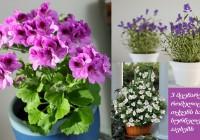 მცენარეები, რომლებიც თქვენს სახლს სურნელებით აავსებენ
